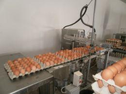 Яйца и птици Ломци - 03 - Яйца и птици Ломци - Мейбъл, Кармен - Търговище